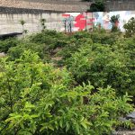 El Liceo Francés de Gran Canaria, una vez más, comprometido con el Medio Ambiente