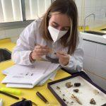 Pasión por la entomología: ¿Cómo determinar una especie de insecto?